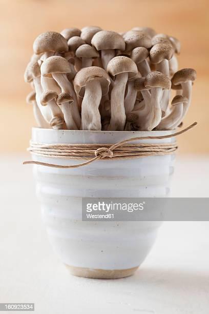 bowl of shimeji mushrooms, close up - shimeji mushroom stock pictures, royalty-free photos & images