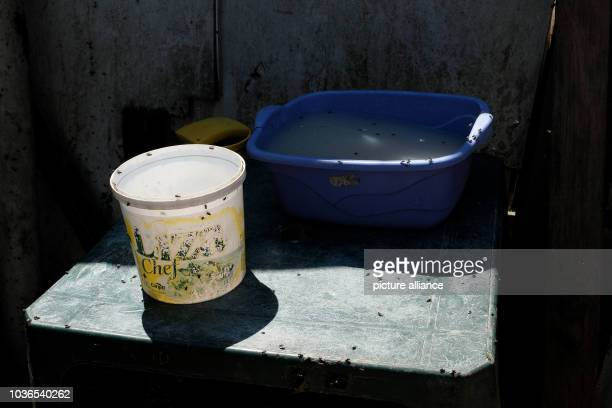 Abowl of water and a bucket in a settlement in the dumps of Gramacho in Rio den Janeiro Brazil 13 Augsut 2016 Hundreds of people live in wooden...