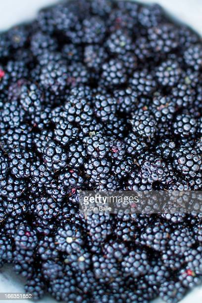 Bowl of wild blackberries from the Oregon coast.