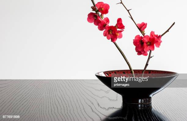bowl with japonica - ikebana stock pictures, royalty-free photos & images