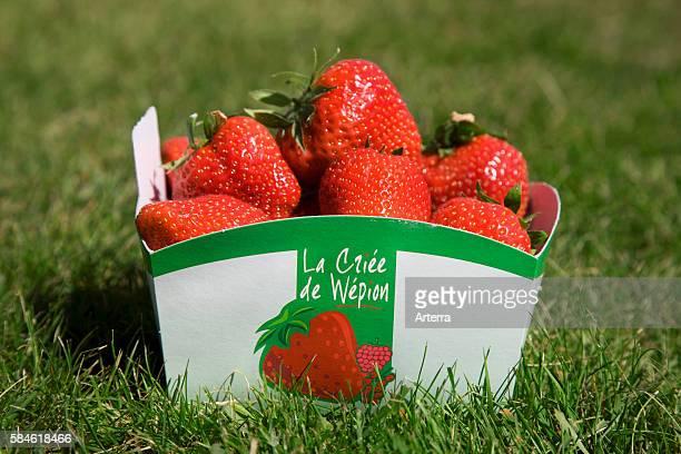 Box filled with the famous fraises de Wepion Belgian capital of the strawberry near Namur Belgium