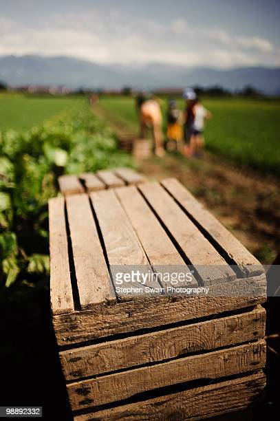 box for storing potatoes - newhealth stock photos and pictures