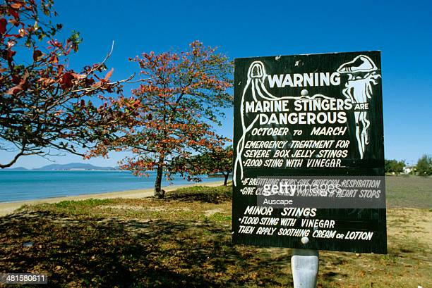 Box jellyfish Chironex fleckeri warning sign Townsville Queensland Australia