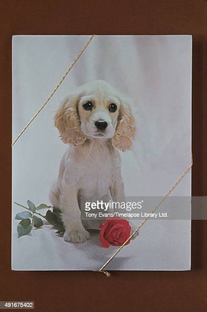 A box of Cadbury's chocolates with a puppy and a rose on it circa 1970