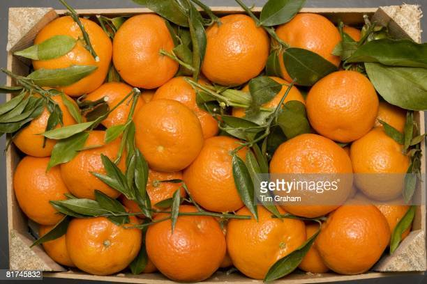 Box of clementines London England United Kingdom