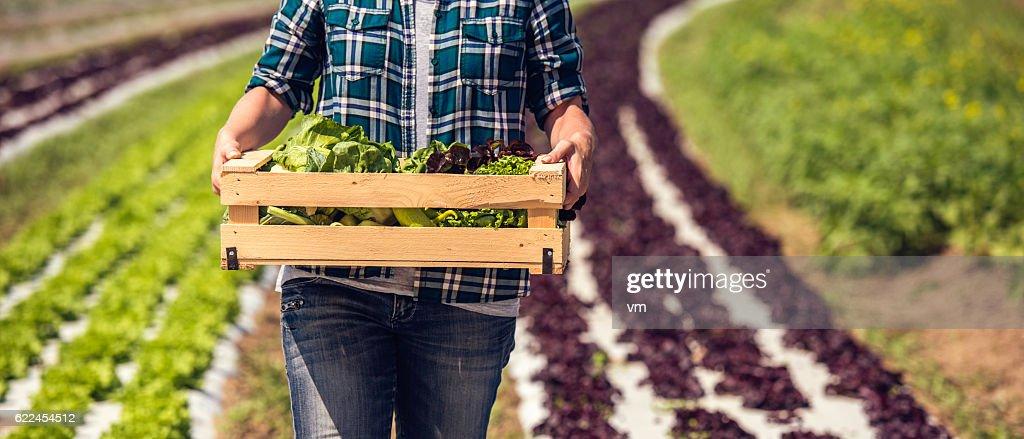 Box of fresh green vegetables : ストックフォト