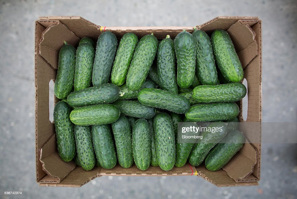 A box of freshly picked cucumbers sit in a greenhouse during harvesting at the Yuzhny Agricultural Complex, operated by AFK Sistema, in Ust-Dzheguta, Russia, on Wednesday, May 18, 2016. The plump hybrid tomatoes, named for the fearsome tank that helped trounce Hitler, are the pride of the Yuzhny Agricultural Complex, a mass of greenhouses the size of 2,300 football fields between the Black and Caspian seas. Photographer: Andrey Rudakov/Bloomberg via Getty Images