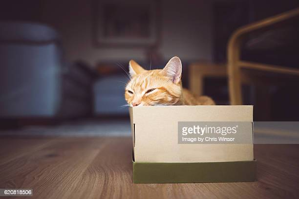 box snooze cat - shoe box stock pictures, royalty-free photos & images