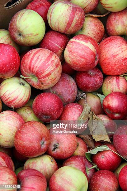 boxed pile of red ripe delicious apples - julian california stock photos and pictures