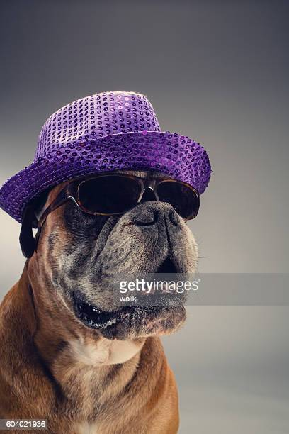 Boxer dog with party hat and sunglasses.