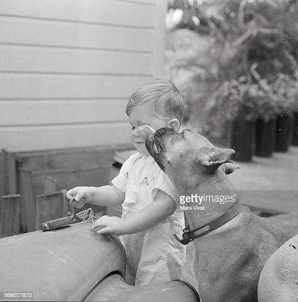 Boxer Licking an Infants Face