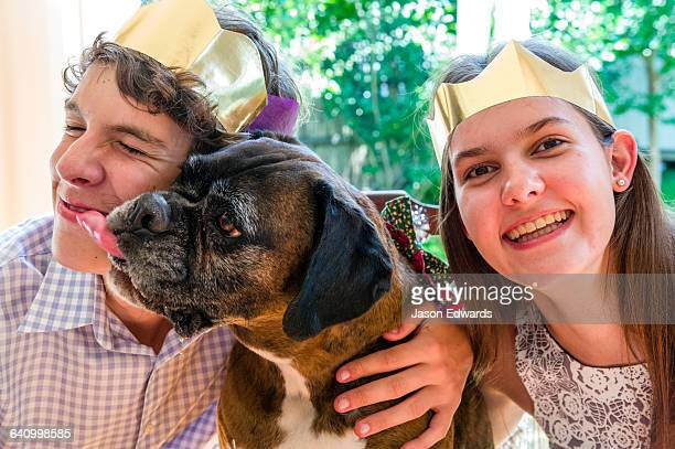 A boxer terrier wearing a Christmas bow tie licking a brother and sister at the dining table.