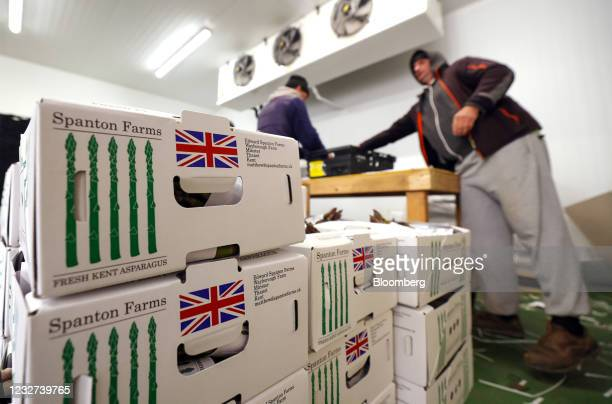 Boxes of freshly cut asparagus in a packing room at a farm in Minster near Ramsgate, U.K, on Thursday, May 6, 2021. Migrant workers have left the...