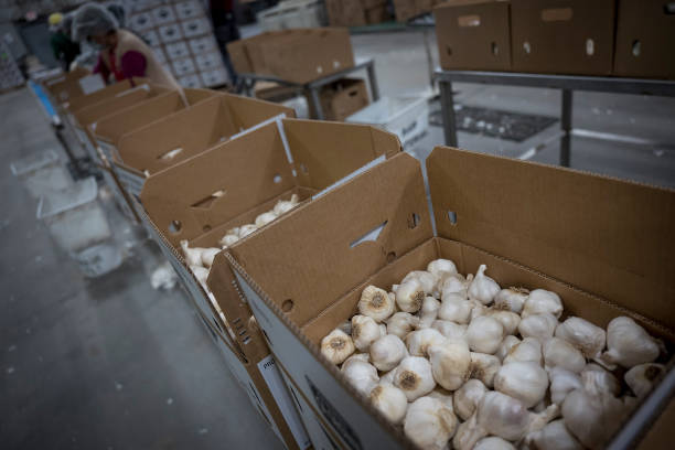 CA: Garlic Production As China Trade Tariffs Benefit California Garlic Growers