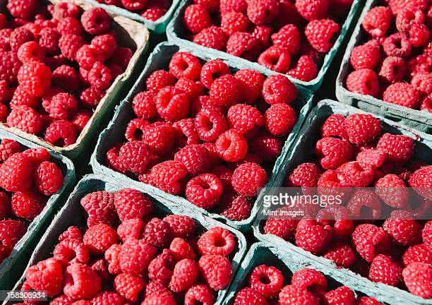 Boxes of organic raspberries on a farmers market stall.