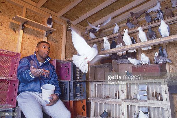 Boxing Casual portrait of heavyweight Mike Tyson feeding his pigeons on rooftop coup Brooklyn NY 12/1/1985