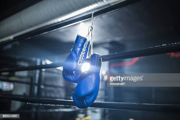 boxing gloves hanging in boxing ring - boxing gloves stock photos and pictures
