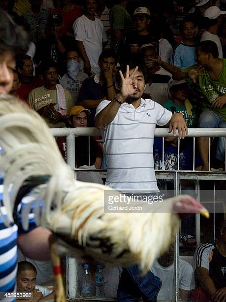 SANTOS MINDANAO PHILIPPINES Boxing star Manny Pacquiao at a cockfighting event in his home town of General Santos in Mindanao An adept of...