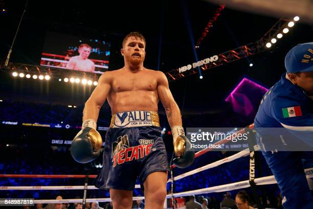 WBA/WBC/IBF/IBO Middleweight Title Canelo Alvarez during fight vs Gennady Golovkin at TMobile Arena Las Vegas NV CREDIT Robert Beck