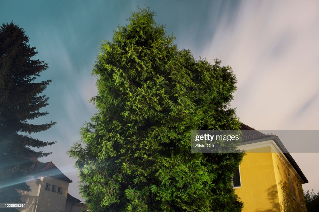 Boxwood obscuring a house : Stock-Foto