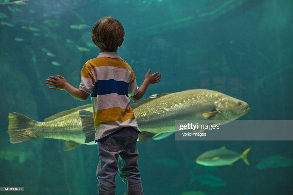 Boy admiring fish in aquarium : Bildbanksbilder