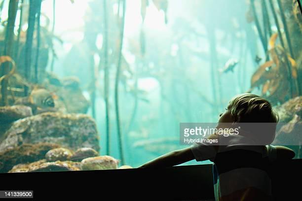 Boy admiring fish in aquarium