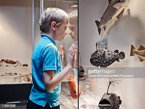 Boy admiring fish models behind glass