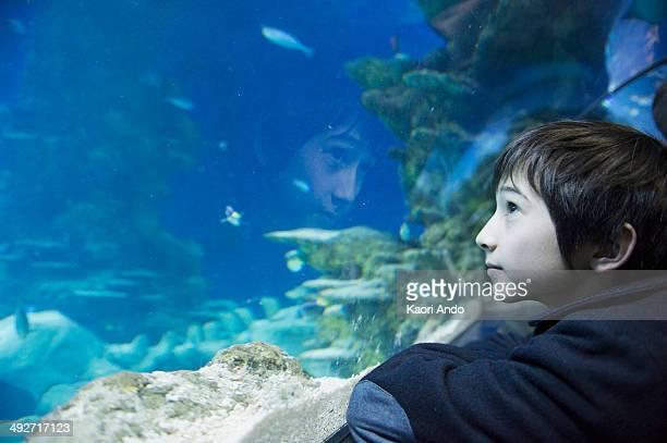 Boy admiring sea life in aquarium