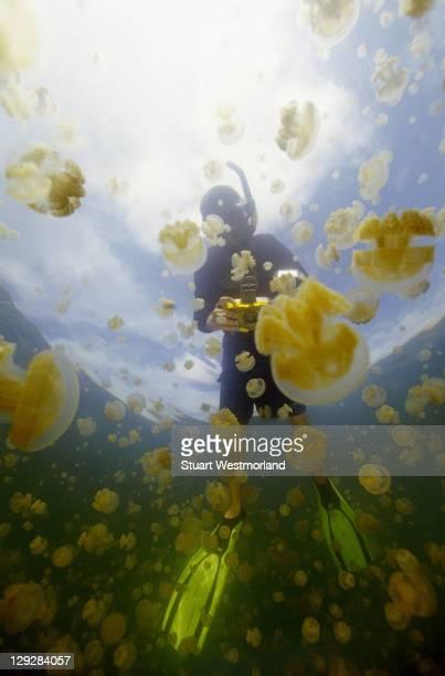 Boy age 12, Mastagias Jellyfish, Palau