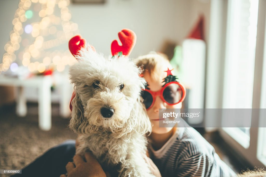 A boy(6 years) wearing christmas glasses is playing with his dog. The dog is wearing fake rain deer ears.