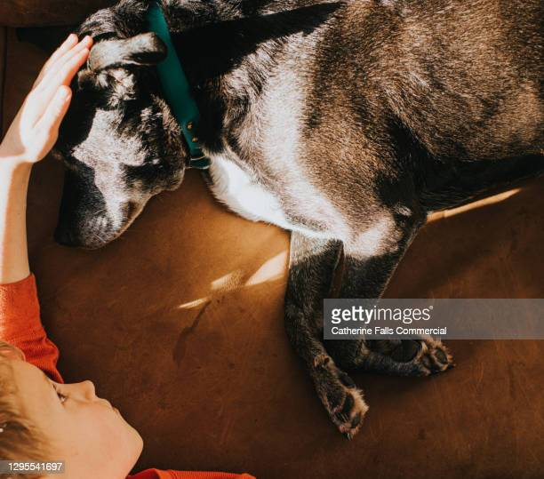 boy and dog are face-to-face on a sofa - affectionate stock pictures, royalty-free photos & images