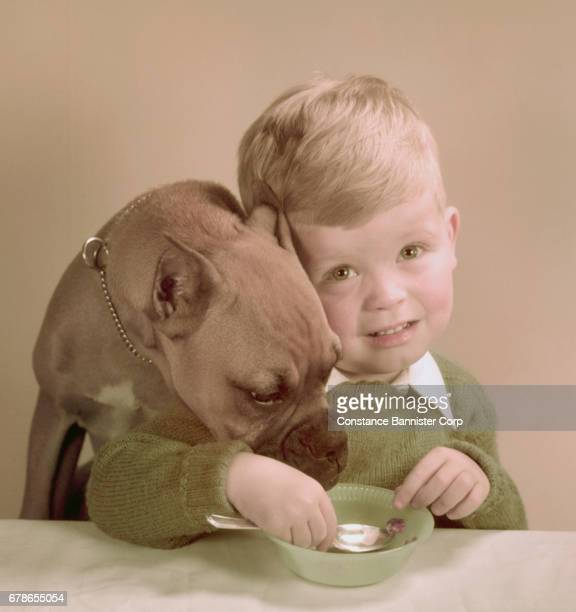 boy and dog at table - pawed mammal stock pictures, royalty-free photos & images