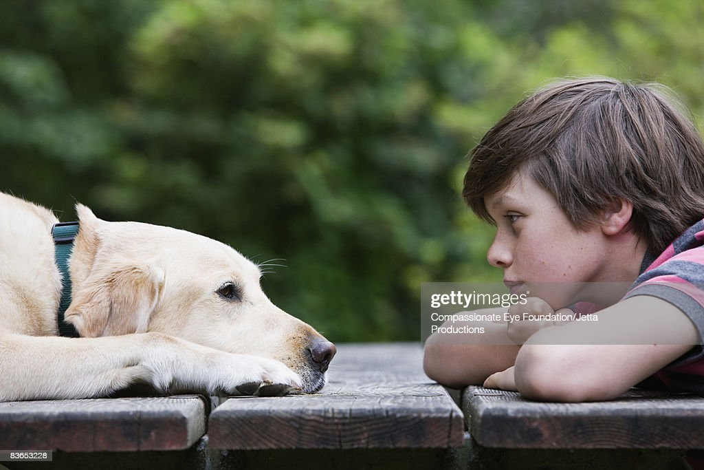 Boy and dog looking eye to across a picnic table : Stock Photo