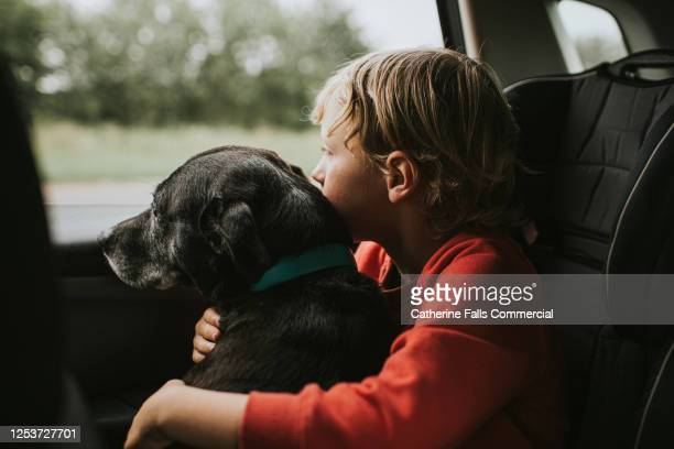 boy and dog looking out of a car window - travel stock pictures, royalty-free photos & images