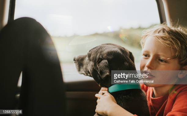 boy and dog looking out of a car window - driver stock pictures, royalty-free photos & images