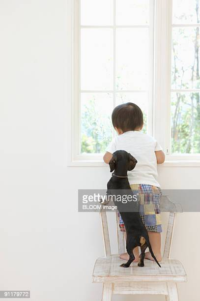 Boy and dog looking out window on chair, rear view