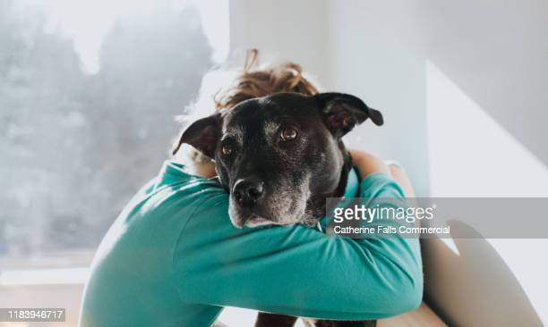 boy and dog - pets stock pictures, royalty-free photos & images