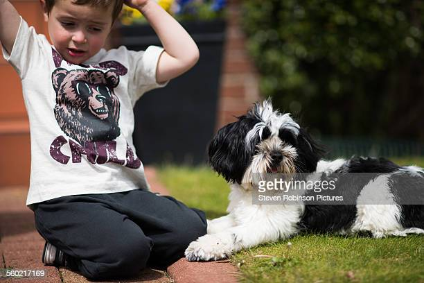 boy and dog - lhasa apso bildbanksfoton och bilder