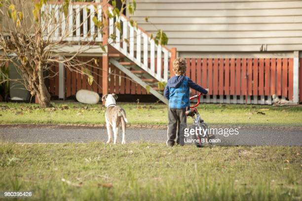 boy and dog - lianne loach stock pictures, royalty-free photos & images