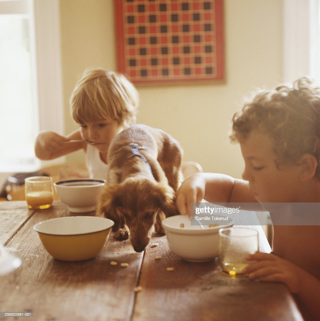 Boy and girl (2-6) eating breakfast with puppy eating scraps on table : Stock Photo