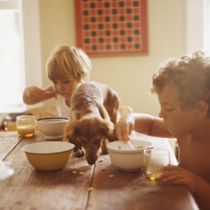Boy and girl (2-6) eating breakfast with puppy eating scraps on table - gettyimageskorea