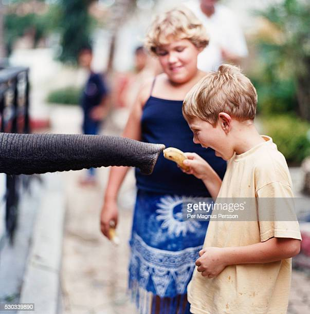 boy and girl feeding elephant in zoo - zoo stock pictures, royalty-free photos & images