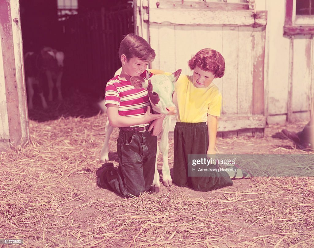 Boy and girl kneeling straw in barn, with Jersey cow calf. (Photo by H. Armstrong Roberts/Retrofile/Getty Images) : Foto de stock