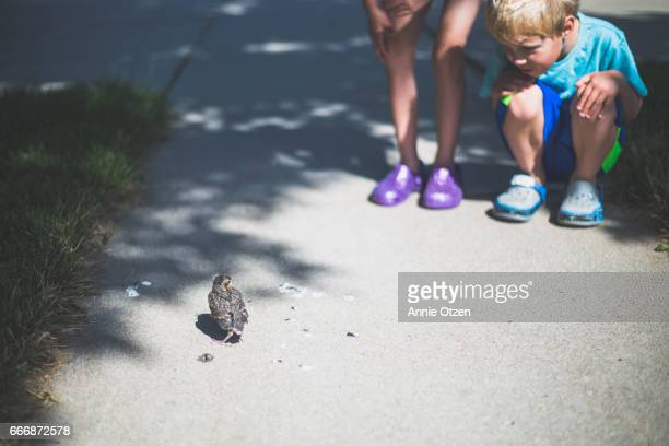 boy and girl looking at baby bird - american robin stock pictures, royalty-free photos & images
