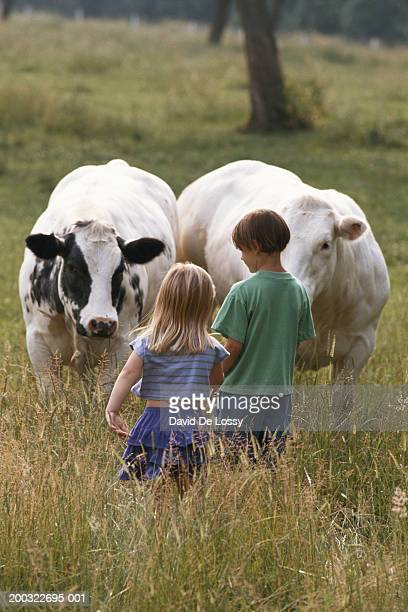 Boy and girl (4-7) looking at cows in field, rear view