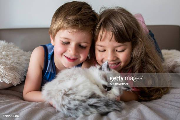boy and girl looking at their kitten. - persian girl stock photos and pictures