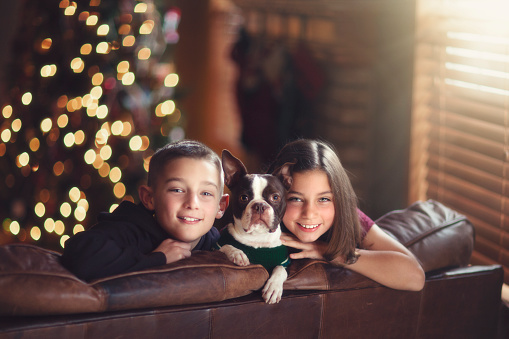 Boy and girl twins with their Boston Terrier dog in front of Christmas tree - gettyimageskorea