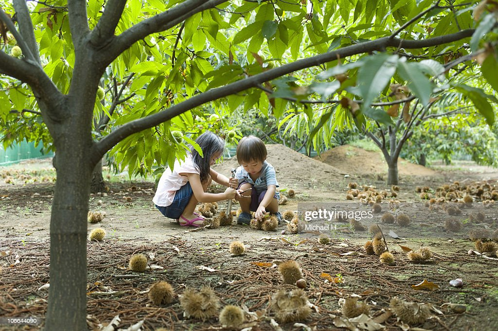 Boy and girl who picks up chestnut : Stock Photo