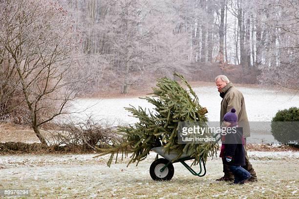 boy and grandfather with christmas tree
