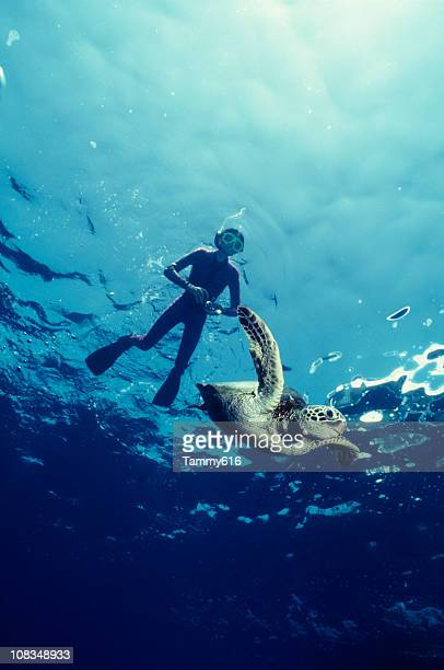 boy and green sea turtle - snorkeling stock pictures, royalty-free photos & images